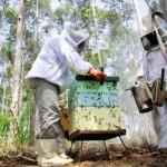 Apicultores de Ecoporanga querem criar associação para industrializar o mel
