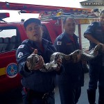 Jiboia de três metros é capturada por Bombeiros em Governador Valadares