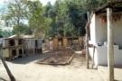 Homem é detido por promover rinha de galo em Alto Rio Novo