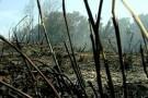 Uma semana depois, incêndio no Parque Estadual de Itaúnas ainda não foi controlado