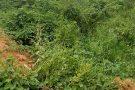 Matagal em bairro de Mantena causa reclamações por parte de moradores