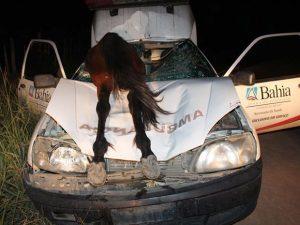 Cavalo atropelado entra por para-brisa e motorista sobrevive na Bahia; fotos