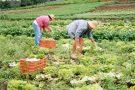 Barra de São Francisco terá Seminário para debater a Agricultura Familiar