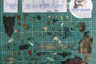 Tartaruga morre após ingerir mais de 100 fragmentos de lixo em Vitória