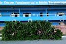 Corte de árvores em frente à Escola Ecoporanga causa revolta em moradores