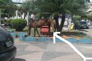 Projeto de Lei veta a circulação de animais de grande porte na área Urbana de Barra de São Francisco
