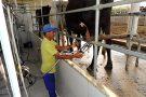 Produtor Rural de Ecoporanga se torna referência em produção de leite e ajuda iniciantes
