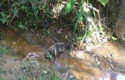 Moradores encontram macaco morto em Boa Vista/Nova Venécia