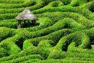 Entre enigmas e labirintos, conheça os maiores e mais famosos