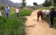 Prefeitura de Ecoporanga começa recolher animais soltos em vias públicas