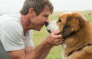 Cientistas analisam cães e concluem que eles também são 'pessoas'