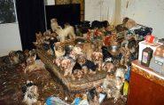 EUA: casal é condenado por manter mais de 170 cães em condições precárias