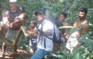 Brasil: Sucuri de 5 metros morde, enrola e mata pit bull