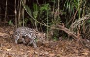 Fotógrafos capturam imagens inéditas de animais no Norte do ES