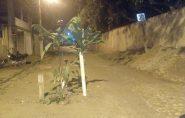 Moradores plantam árvore na rua para chamar atenção da administração de Barra de São Francisco