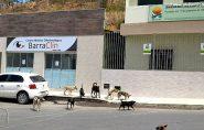 Moradores estão preocupados com a grande quantidade de cachorros no centro de Barra de São Francisco
