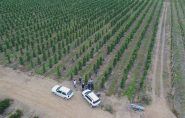 Produtores de Ecoporanga visitam plantação de pimenta do reino em Jaguaré