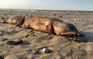Biólogo identifica criatura que furacão levou para praia nos EUA