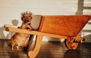 Cadelinha ganha ensaio de gestante e encanta internet. Veja o resultado!