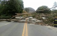 Árvore cai e bloqueia pistas da BR-101, em Ibiraçu