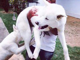 Cantor Fabrício oferece recompensa para quem encontrar seu casal de cachorros de estimação