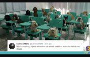 Juíza usa memes de animais para ensinar Direito Penal