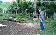 22 carneiros mortos de forma curiosa em Ecoporanga. Proprietário afirma ser onça