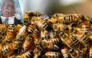 Antigo morador de Água Doce do Norte morre em Rondônia após ser picado por abelhas