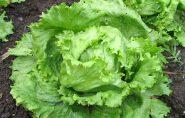 Preço de verduras e legumes sobe mais de 100% em menos de um mês no Espírito Santo