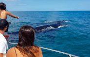 Baleias chegam ao Espírito Santo e temporada de observação começa em julho