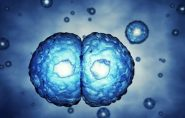 SP: clonagem e extração de DNA viram parte da aula em colégios