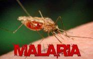 Alerta no Noroeste: malária mata uma pessoa em Vila Pavão