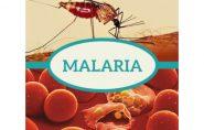 Região Norte do Espírito Santo já foi endêmica para a malária. População está preocupada