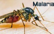 Vigilância Ambiental em Saúde de Barra de São Francisco inicia medida protetiva contra malária