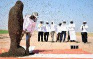 Homem se cobre com 20 mil abelhas, mas não consegue bater recorde mundial