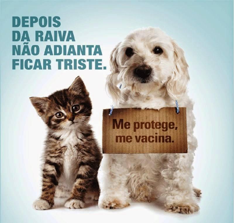 Resultado de imagem para campanha de vacinação para cães e gatos
