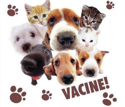 vacina_antirrabica