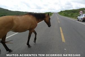 cavalo-na-pista